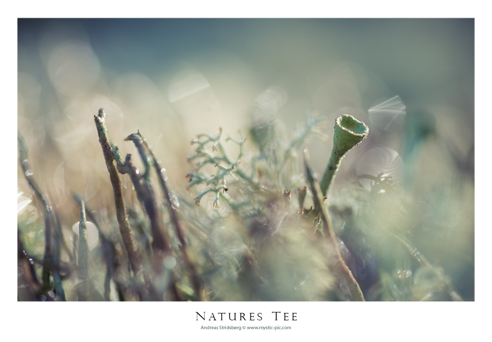 Natures Tee